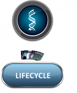 Lifecycle1